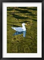 Framed Bird, Desolation Sound, British Columbia, Canada