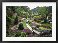 Framed Tulips, Butchart Gardens, Victoria, British Columbia, Canada