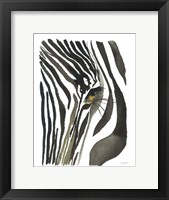 Framed Zebra Eye