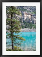 Framed Pine tree, Moraine Lake, Banff National Park, Canada