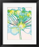 Framed Pop Dandelion