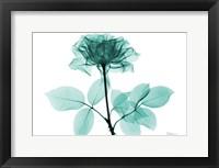 Framed Tea Rose 1