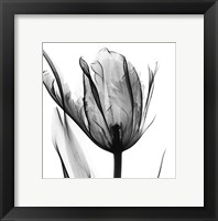 Framed High Contrast Tulip