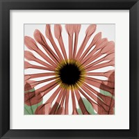 Framed Chrysanthemum Marsala