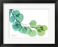 Framed Eucalyptus Green Blue