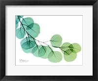 Framed Eucalyptus Green Blue