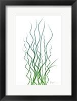 Framed Corkscrew Rush Bluegreen