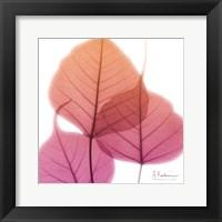 Framed Bo Tree Pink Orange