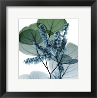 Framed Lilly Of Eucalyptus 2