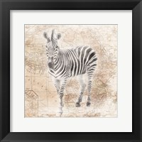 African Animals - Zebra Framed Print