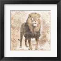 Framed African  Animals - Lion