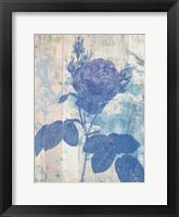 Blue Rose In My Garden Framed Print