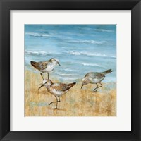 Sandpipers II Framed Print