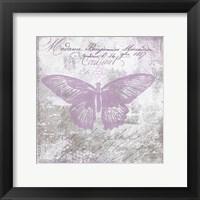 Vintage Butterfly I Mauve Framed Print
