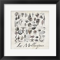 Framed Vintage Shells
