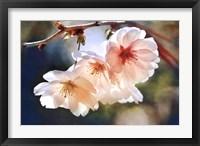 Framed Cherry Blossom 1