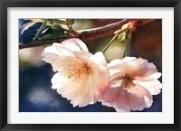 Framed Cherry Blossom 2