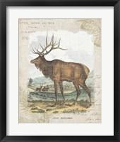 Woodland Stag II Framed Print