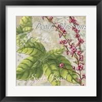 Framed Herbs 4 Basil