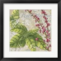 Herbs 4 Basil Framed Print