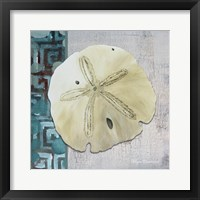 Sand Dollar 1 - Side Border And Turquoise Crackle Back Framed Print