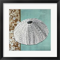 Silver Sea Urchin - Tan Side Border Teal Crackle Back Framed Print