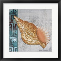 Spotted Conch Seashell - Side Border And Gray Crackle Back Framed Print