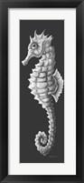 Framed Gray On Gray Seahorse 1