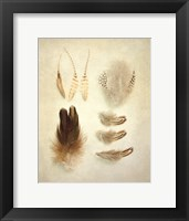 Framed Feathers II