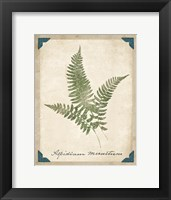 Vintage Ferns X Framed Print