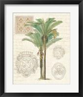 Vintage Palm Study II Framed Print