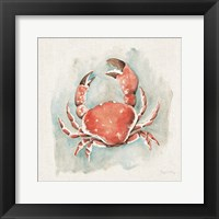 Framed Coastal Mist Crab