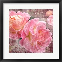 Fresh Rose III Framed Print