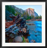 Framed Tree roots in Merced River in the Yosemite Valley