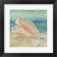 Horizon Shells III Framed Print