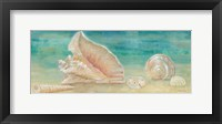 Horizon Shells Panel II Framed Print