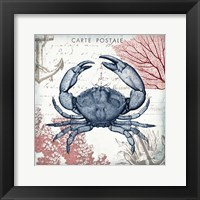 Coastal Sea Life II Framed Print