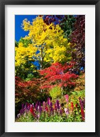Framed Autumn Color, Butchard Gardens, Victoria, British Columbia, Canada