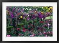 Framed Rose Garden at Butchard Gardens In Full Bloom, Victoria, British Columbia, Canada