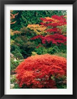 Framed View of Butchart Garden, Victoria, British Columbia, Canada