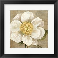 Up Close Cream Rose Framed Print