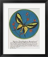 Paradisea Framed Print