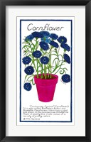 Cornflower Framed Print