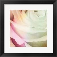 Framed Macro Rose