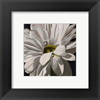 Framed Black Tie Daisy