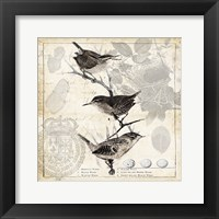 Botanical Birds Black Cream I Framed Print