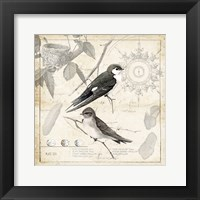 Botanical Birds Black Cream II Framed Print
