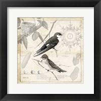 Framed Botanical Birds Black Cream II