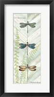 Dragonfly Botanical Panels I Framed Print