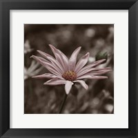 Hint of Spring IV Framed Print